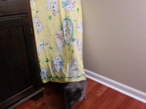 gray cat hiding behind yellow curtain with white cats on it.