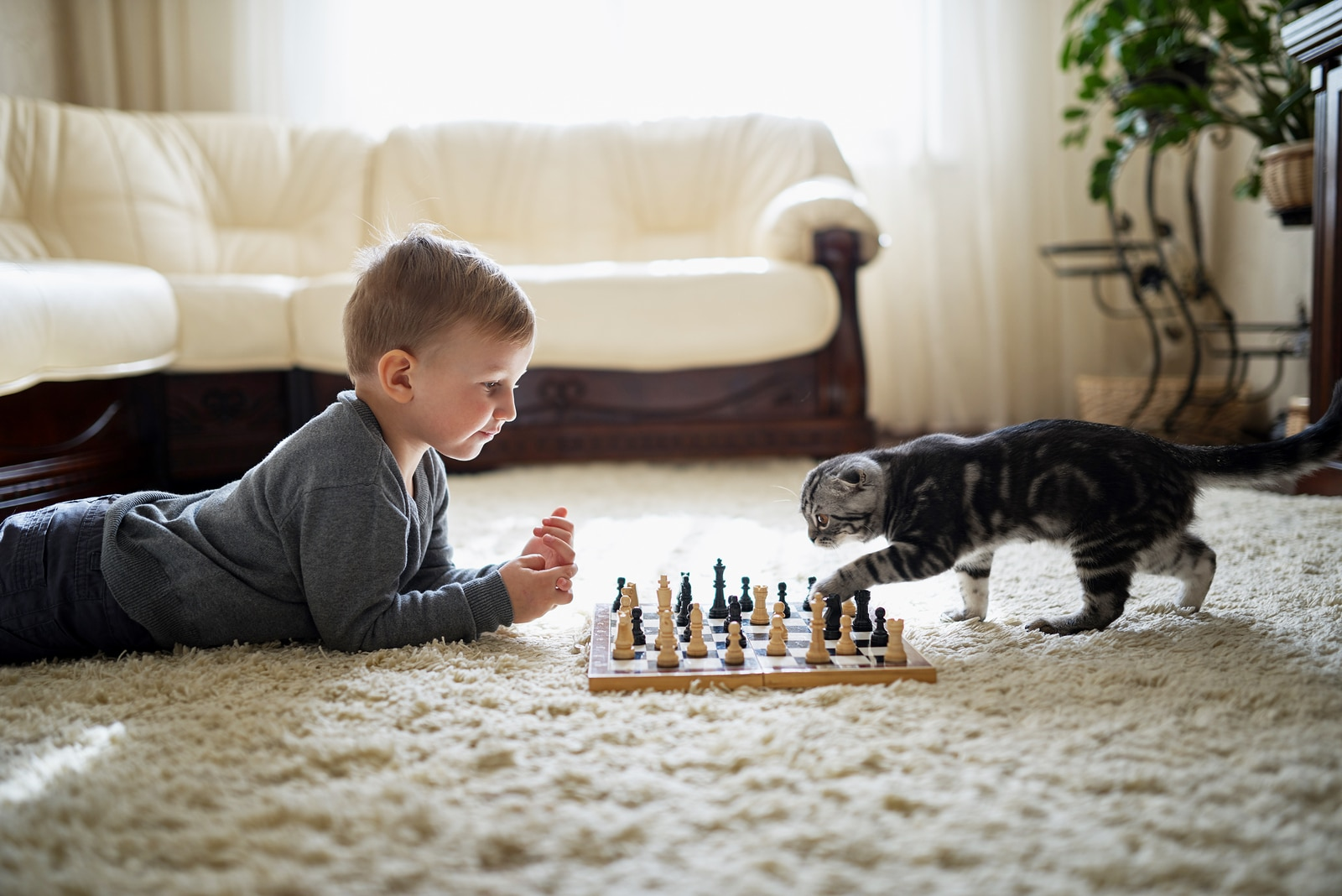 Little boy lies on the ground with a chess board, while a tabby cat paws at one of the pieces.