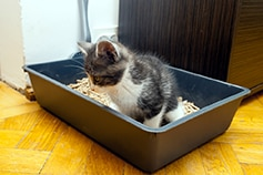 Small kitten sitting in a litter box.