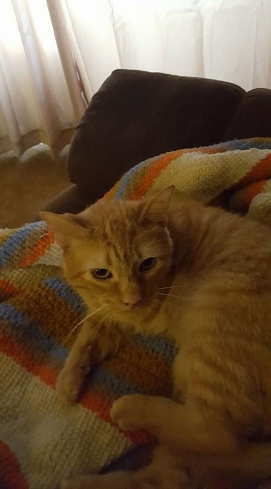 Orange cat lying on blanket