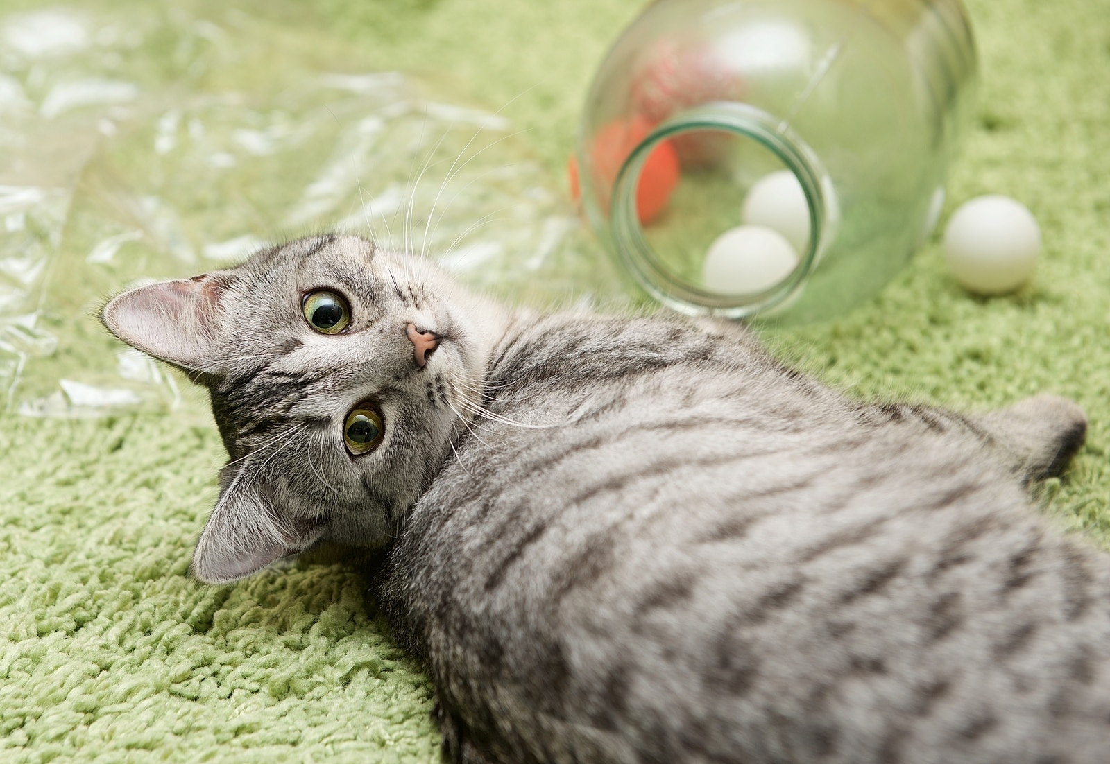 Gray cat lying on green carpet next to a jar with ping pong balls in it.