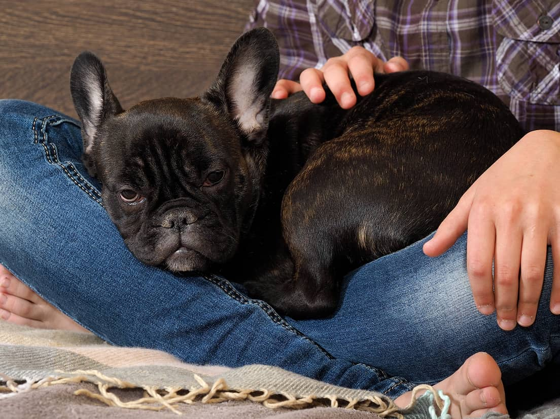Woman sitting crosslegged on a bed with a black French bulldog
