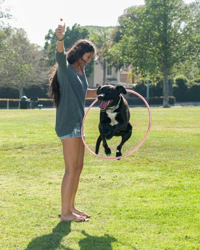 Labrador mix dog jumping through hula hoop that girl in gray sweater holds up.