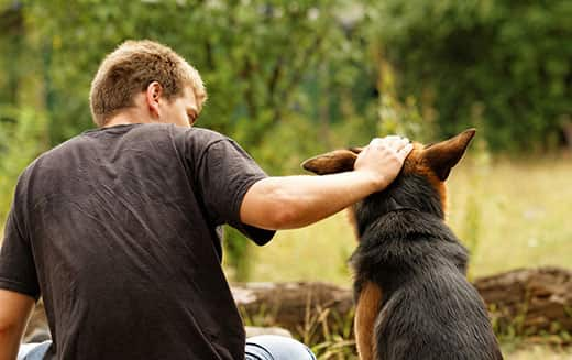 Young man ruffling the head a German Shepherd