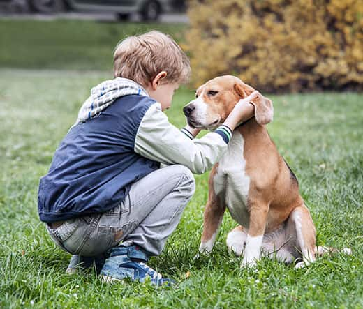 Boy in blue jacket stands crouched in front of a sitting beagle as he pets his ears.