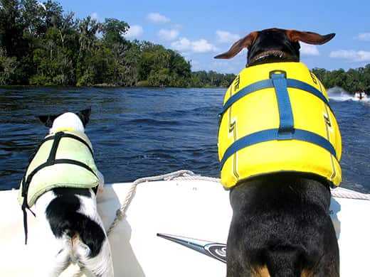 Two dogs in life vests sit perched at the bow of a boat on a lake.