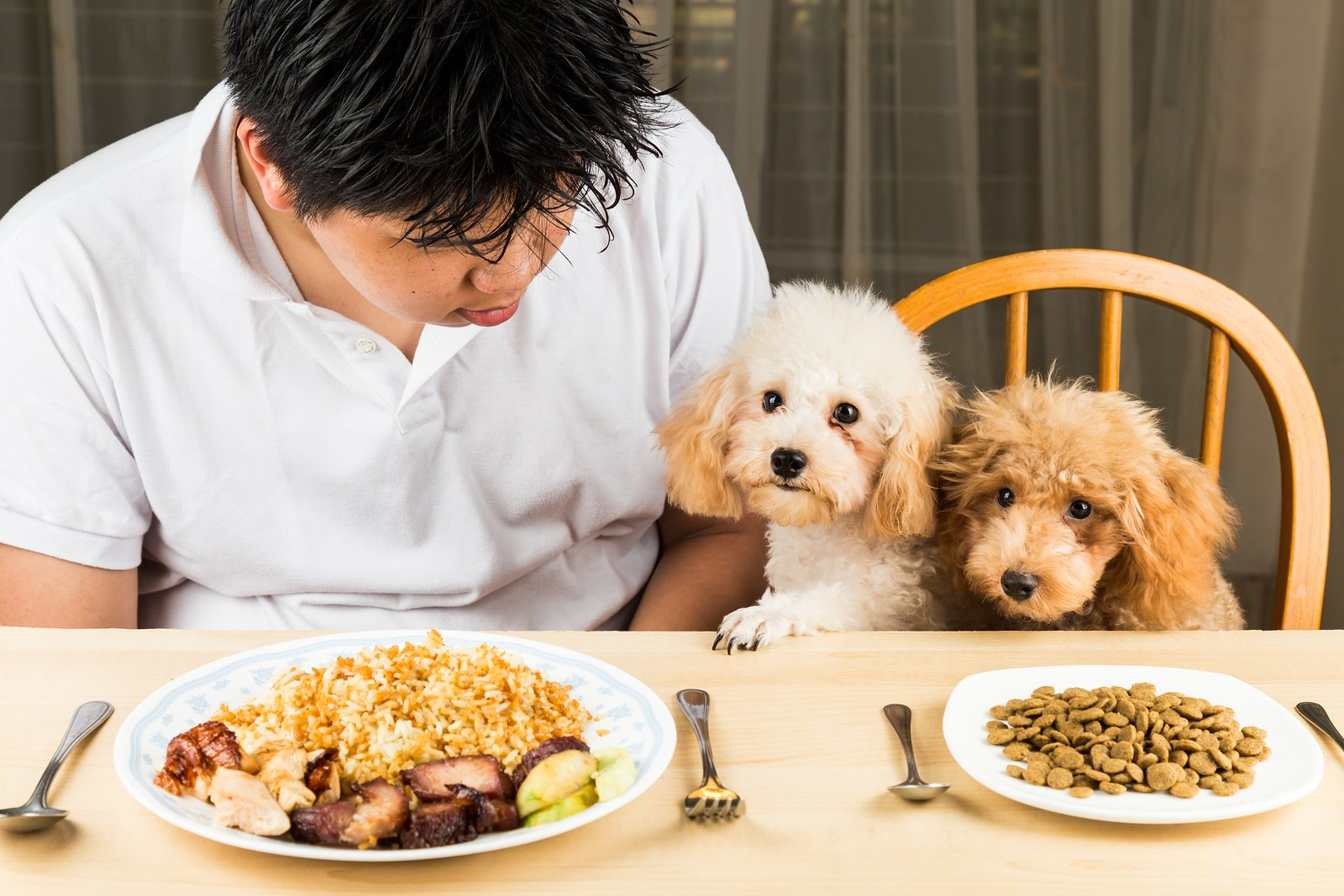 Puppies eyeing the plate of rice and meat on a teenager