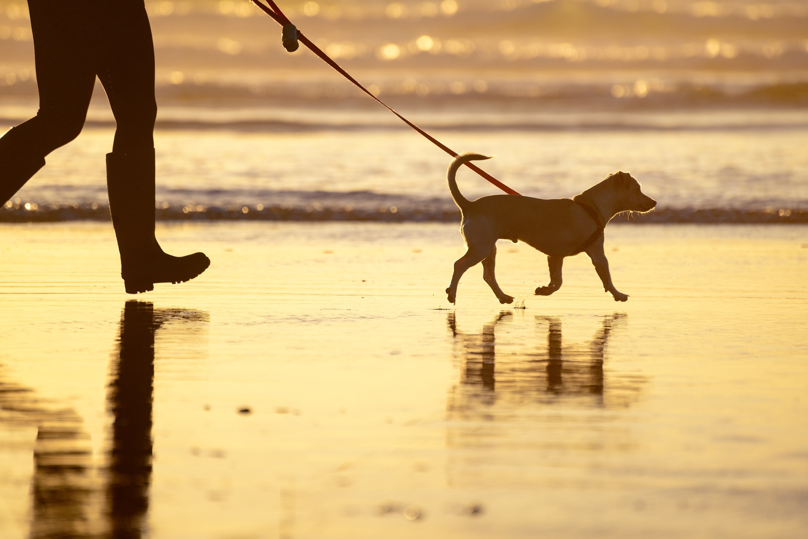 Dog walking on the beach at sunset with owner in tow.